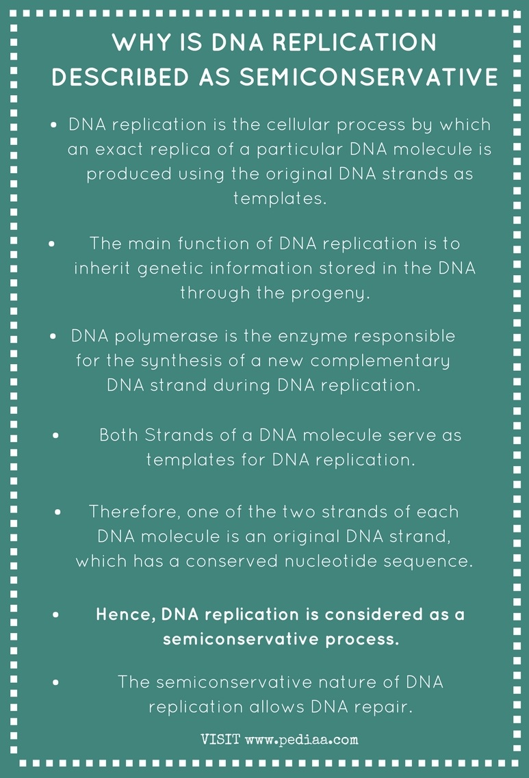 Why is DNA Replication Described as Semiconservative - Infographic