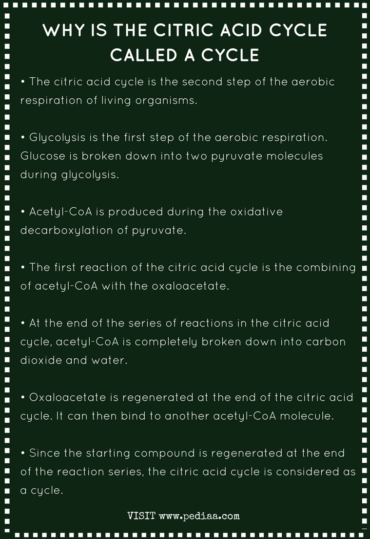 Why is the Citric Acid Cycle Called a Cycle - Infographic
