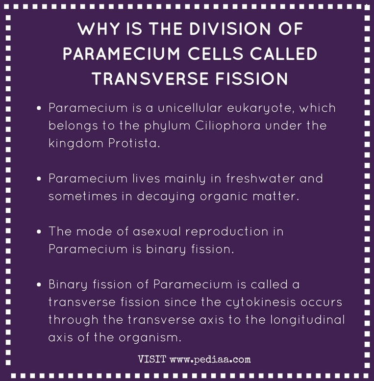 Why is the Division of Paramecium Cells Called Transverse Fission- Infograph
