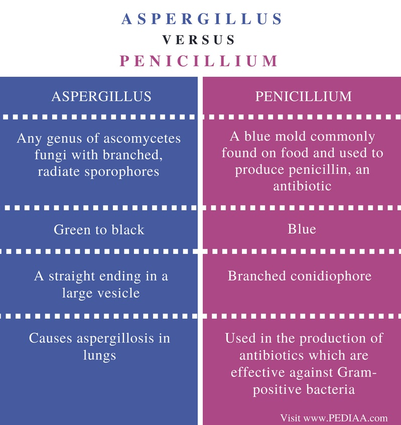 Difference Between Aspergillus and Penicillium - Comparison Summary