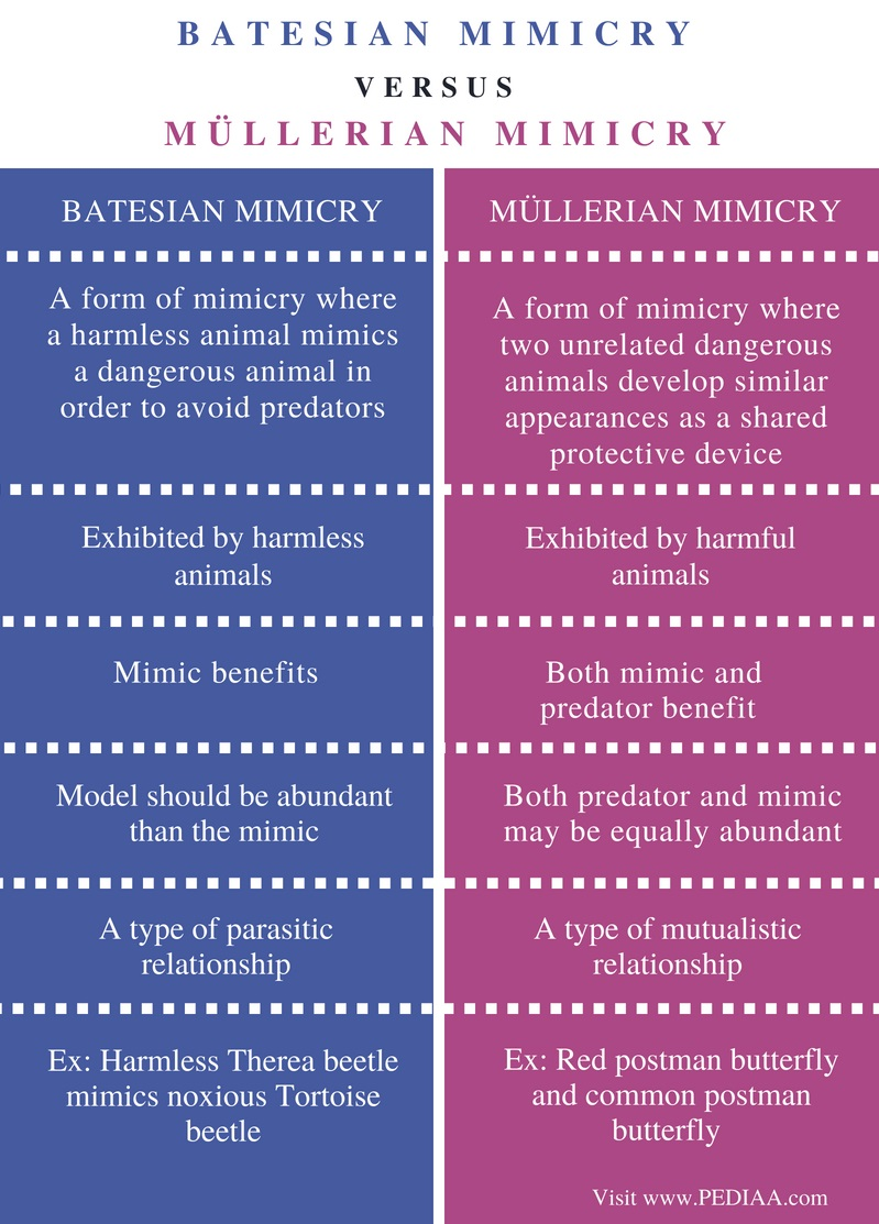 Difference Between Batesian and Mullerian Mimicry - Comparison Summary