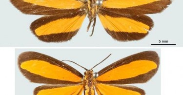 Difference Between Batesian and Müllerian Mimicry