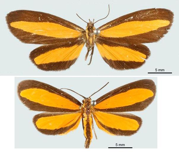 Difference Between Batesian and Mullerian Mimicry