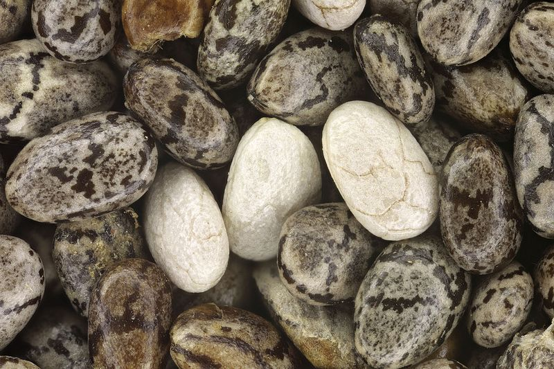 Difference Between Black and White Chia Seeds