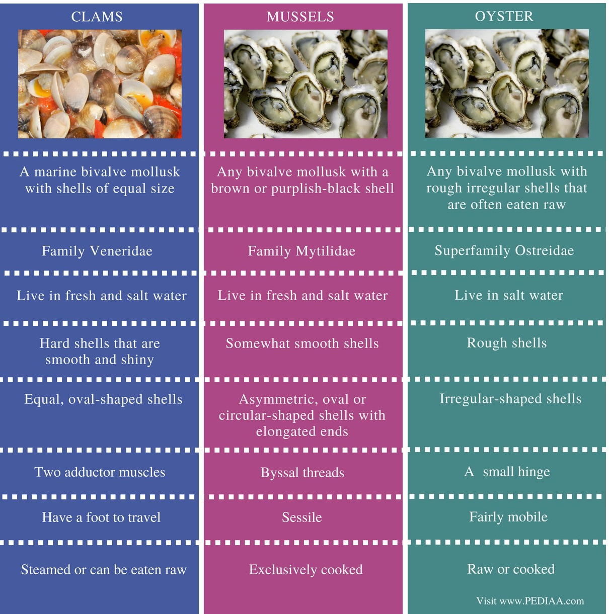 Difference Between Clams Mussels and Oysters - Comparison Summary (2)
