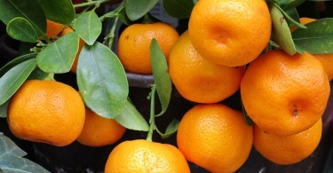 Difference Between Mandarin and Clementine
