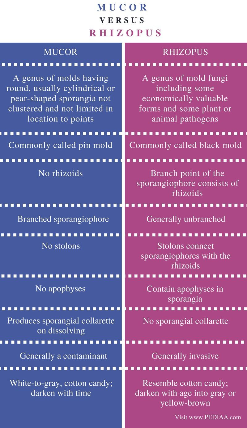 Difference Between Mucor and Rhizopus - Comparison Summary