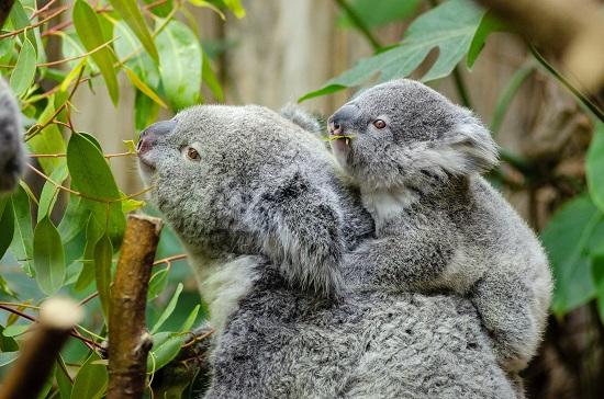 What Makes Sydney Zoo Unique