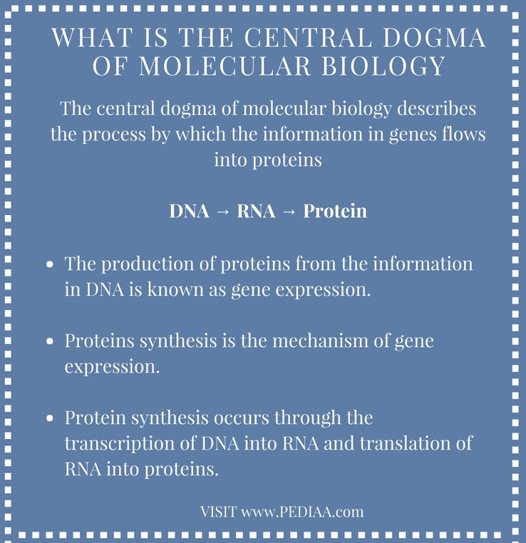 What is the Central Dogma of Molecular Biology - Infograph
