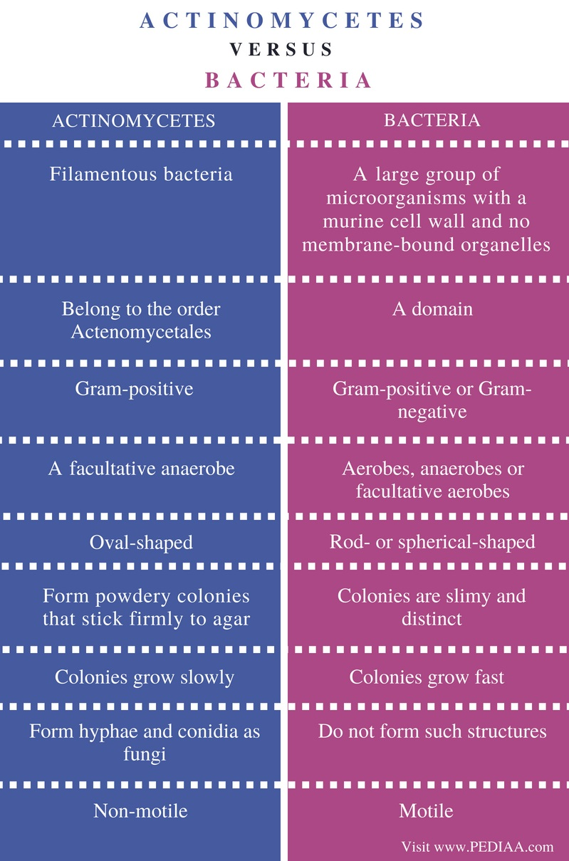 Difference Actinomycetes and Bacteria - Comparison Summary