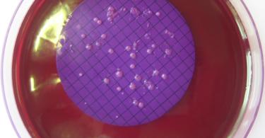 Figure 2: Membranfiltration of Coliform on Endo-Agar