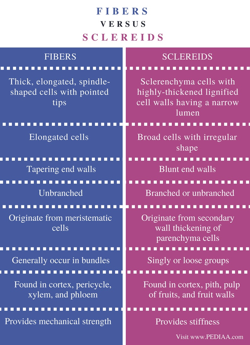 Difference Between Fibers and Sclereids - Comparison Summary
