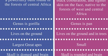 Difference Between Gorilla and Chimpanzee - Comparison Summary