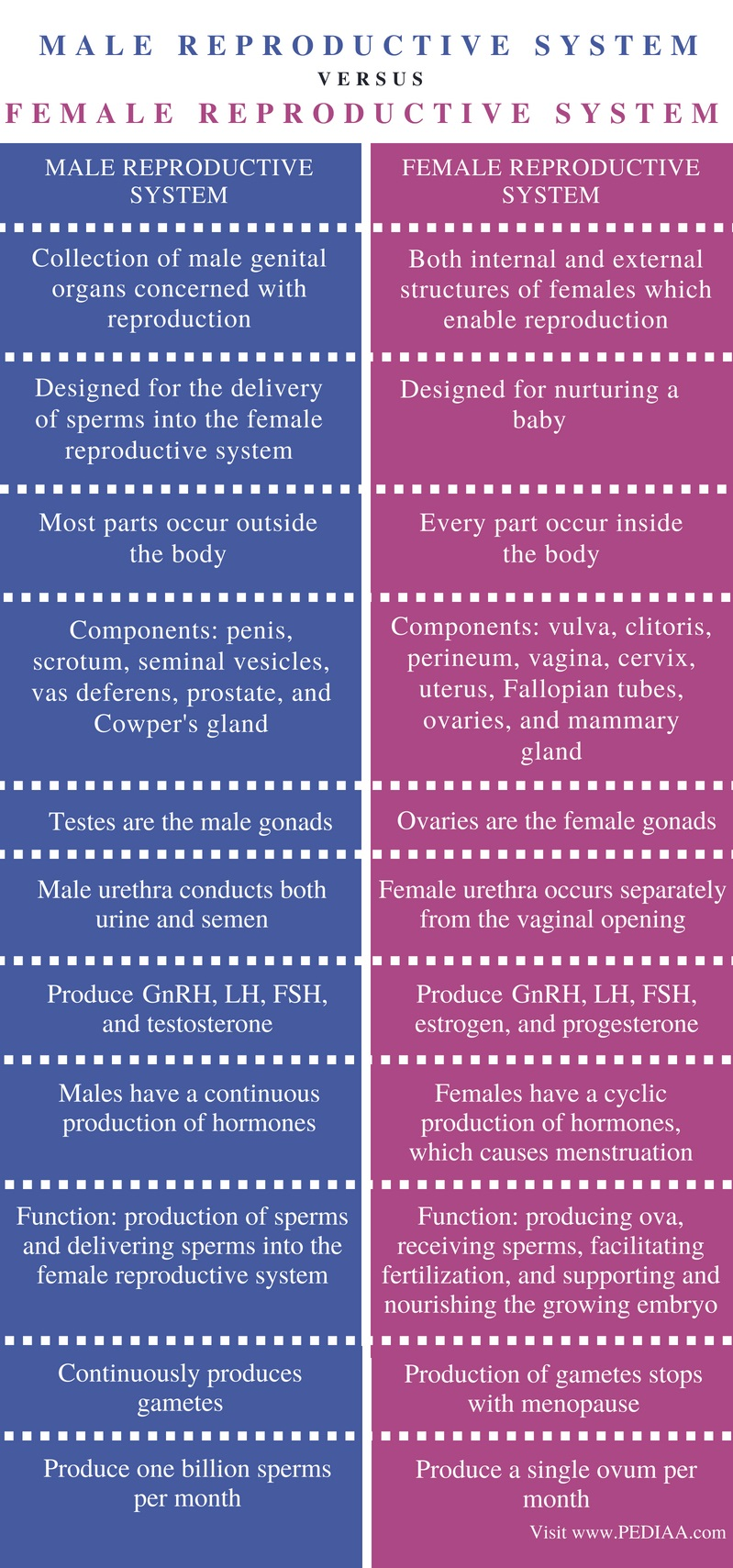 Difference Between Male and Female Reproductive System - Comparison Summary