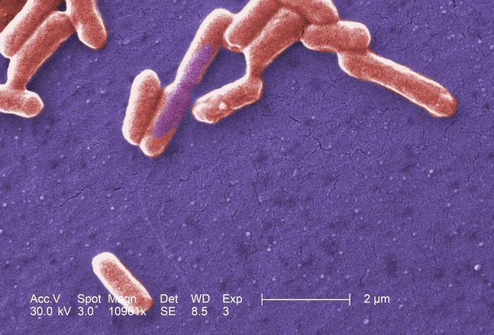 Main Difference - Pathogenic and Nonpathogenic Bacteria