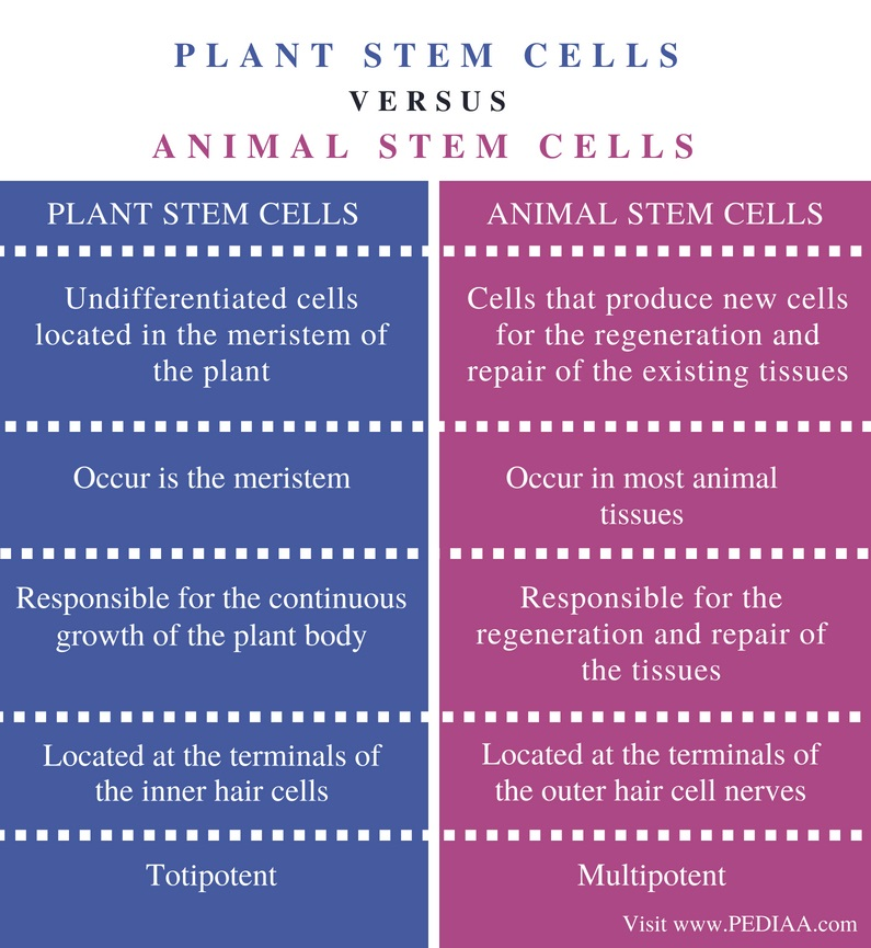 Difference Between Plant and Animal Stem Cells - Comparison Summary
