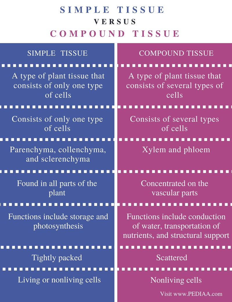 Difference Between Simple and Compound Tissue - Comparison Summary