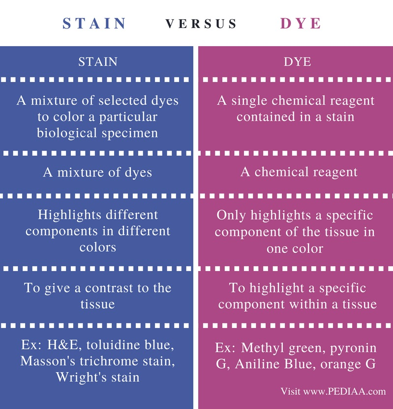 Difference Between Stain and Dye - Comparison Summary