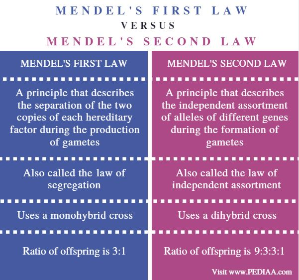 Mendel's First and Second Law - Comparison Summary