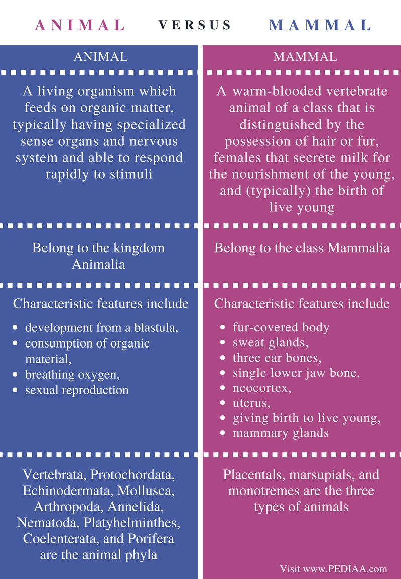 Difference Between Animal and Mammal - Comparison Summary