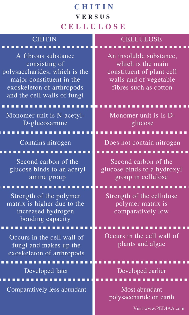 Difference Between Chitin and Cellulose - Comparison Summary