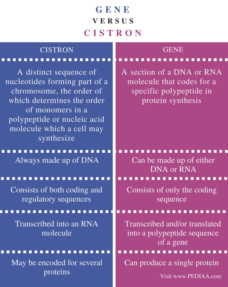 Difference Between Gene and Cistron - Comparison Summary