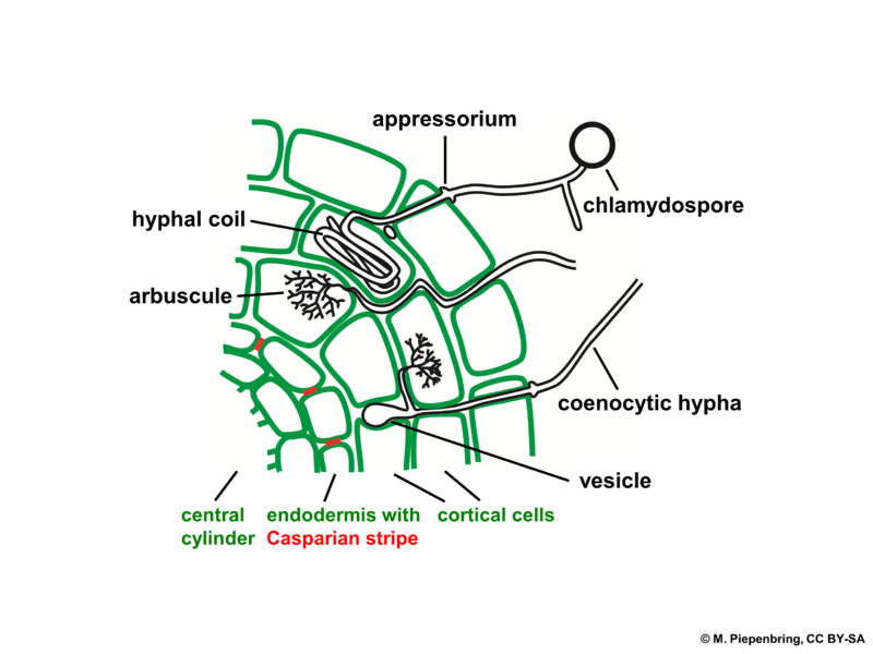 Difference Between Insectivorous Plants and Symbiotic Plants_Symbiotic Plants Mutualism