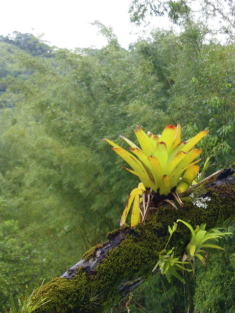 epiphytes and tropical trees symbiotic relationship definition