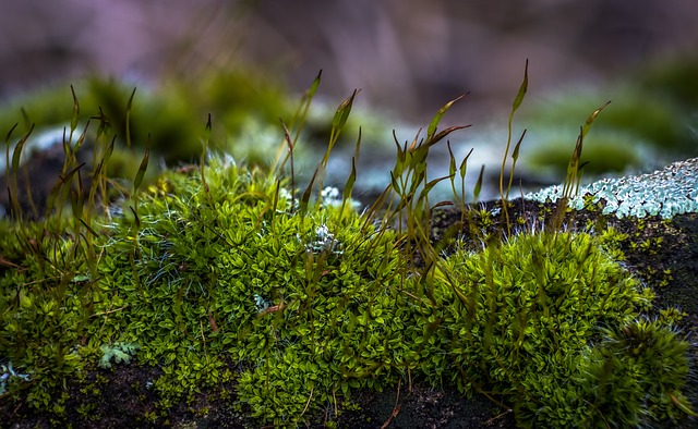 Difference Between Moss and Lichen