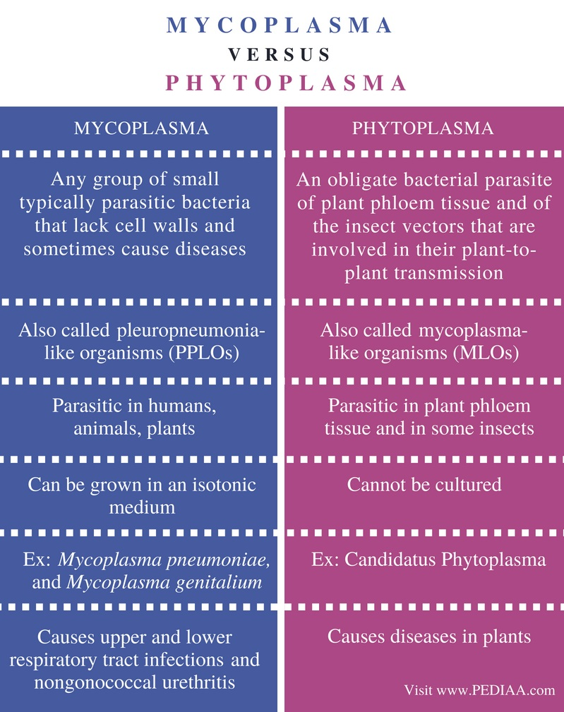 Difference Between Mycoplasma and Phytoplasma - Comparison Summary