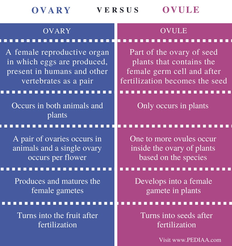 Difference Between Ovary and Ovule - Comparison Summary