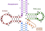 RNA Polymerase 1 2 3
