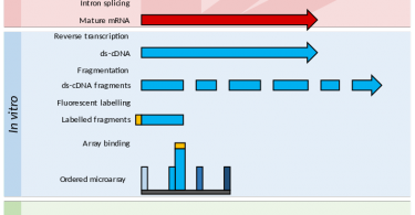 Main Difference - RNA Seq and Microarray