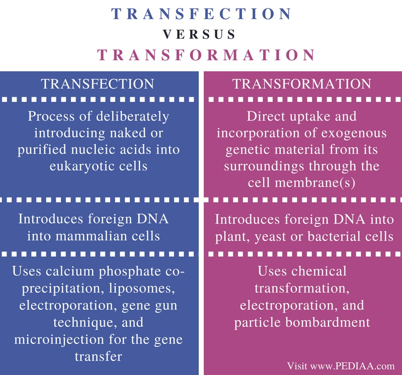 Difference Between Transfection and Transformation - Comparison Summary