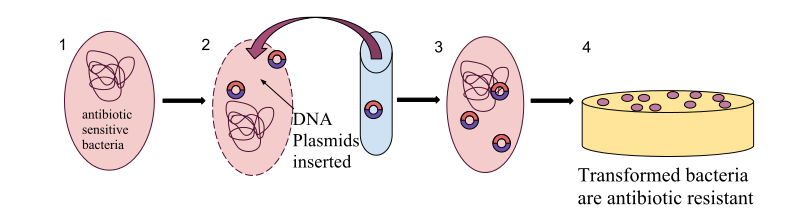 Main Difference - Transfection vs Transformation