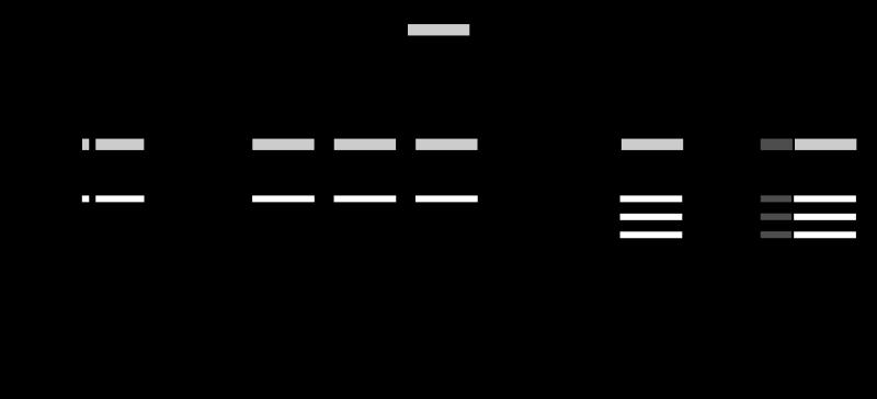 Difference - Tumor Suppressor Genes and Proto Oncogenes