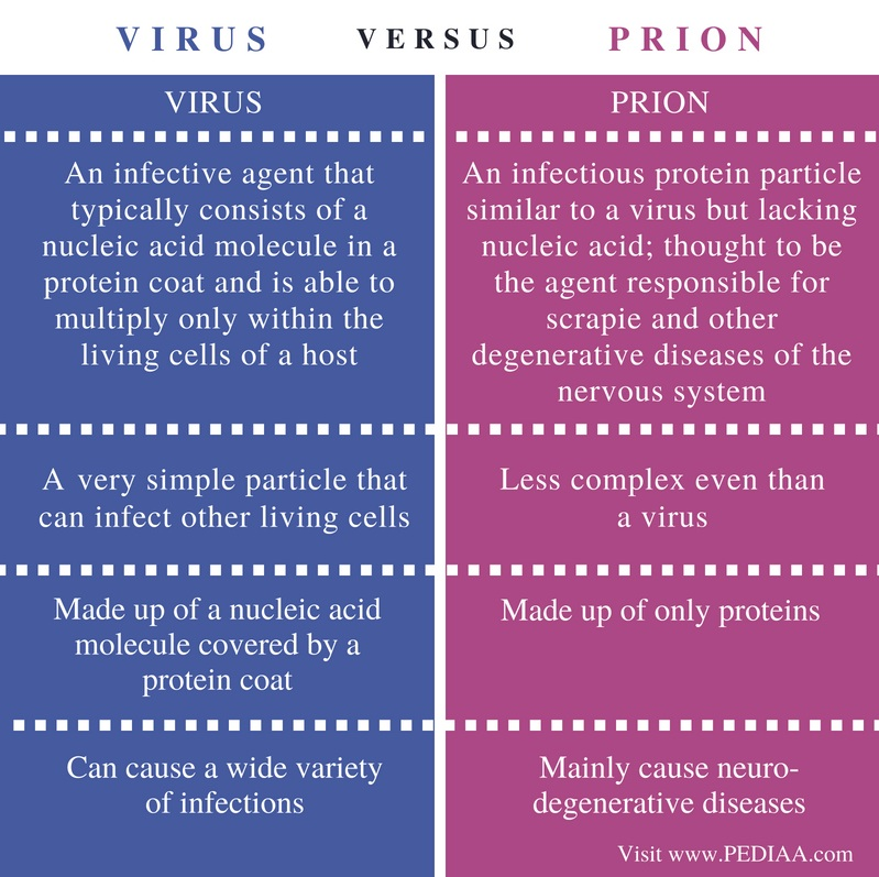 Difference Between Virus and Prion - Comparison Summary
