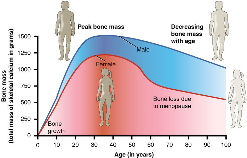 What is the Difference Between Bone Mass and Bone Density