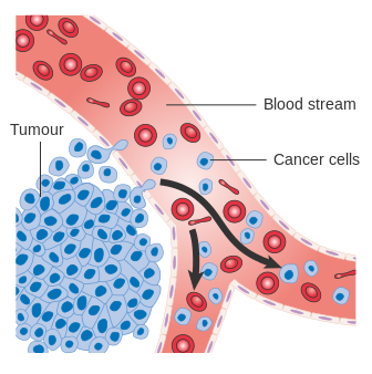 What is the Difference Between Cancer Cells and Normal Cells