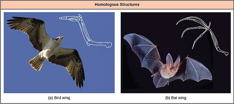 DIfference Between Adaptation and Evolution_Figure 3