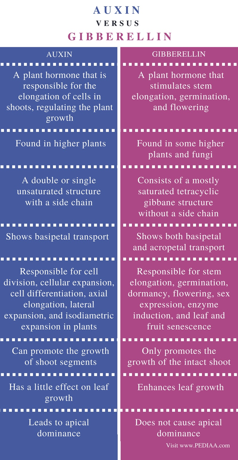 Difference Between Auxin and Gibberellin - Comparison Summary