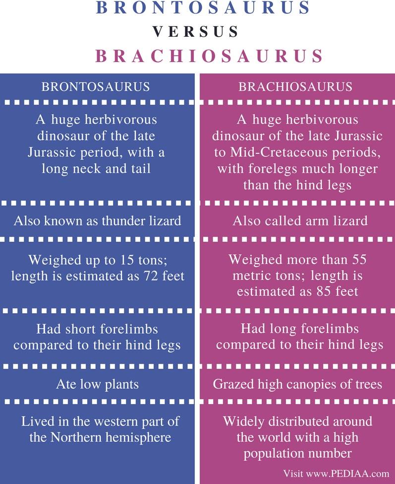Difference Between Brontosaurus and Brachiosaurus - Comparison Summary