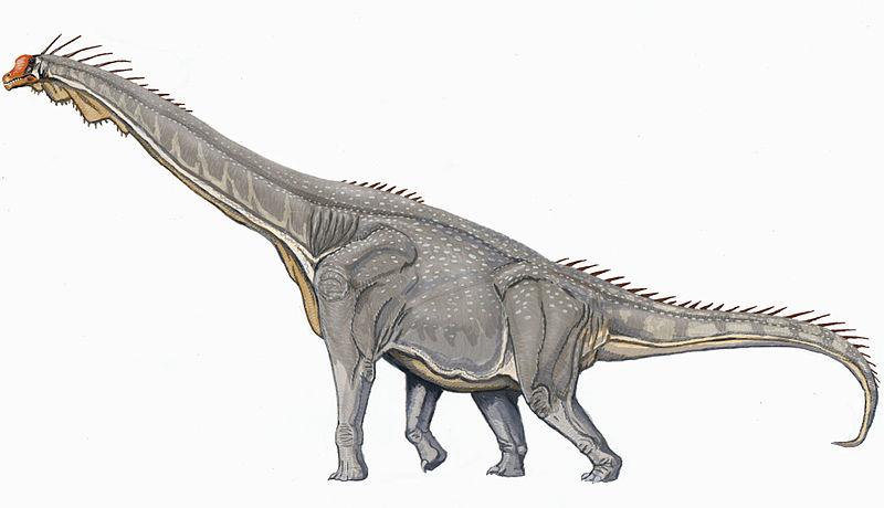 Difference Between Brontosaurus and Brachiosaurus_Figure 02
