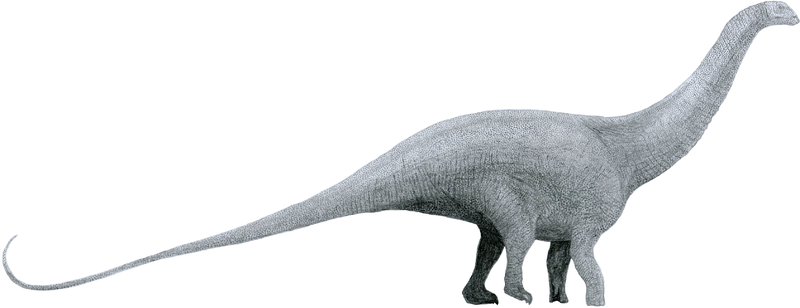 Difference Between Brontosaurus and Brachiosaurus_Figure 01