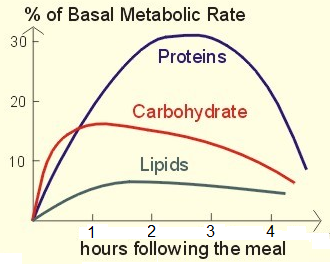 Main Difference - Carbs and Calories