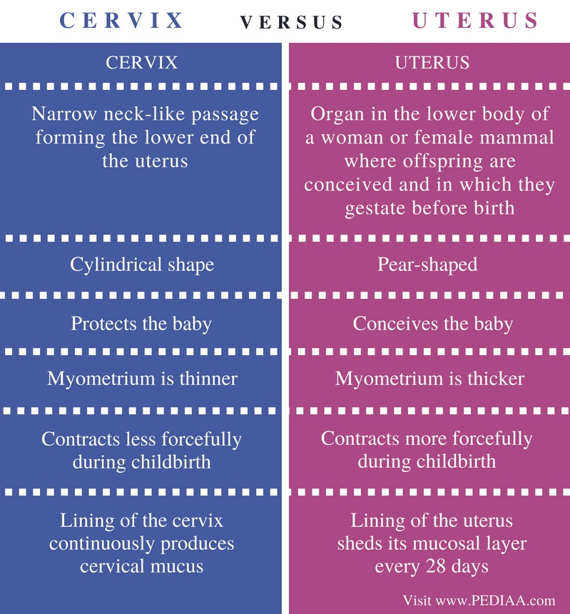 Difference Between Cervix And Uterus Pediaa