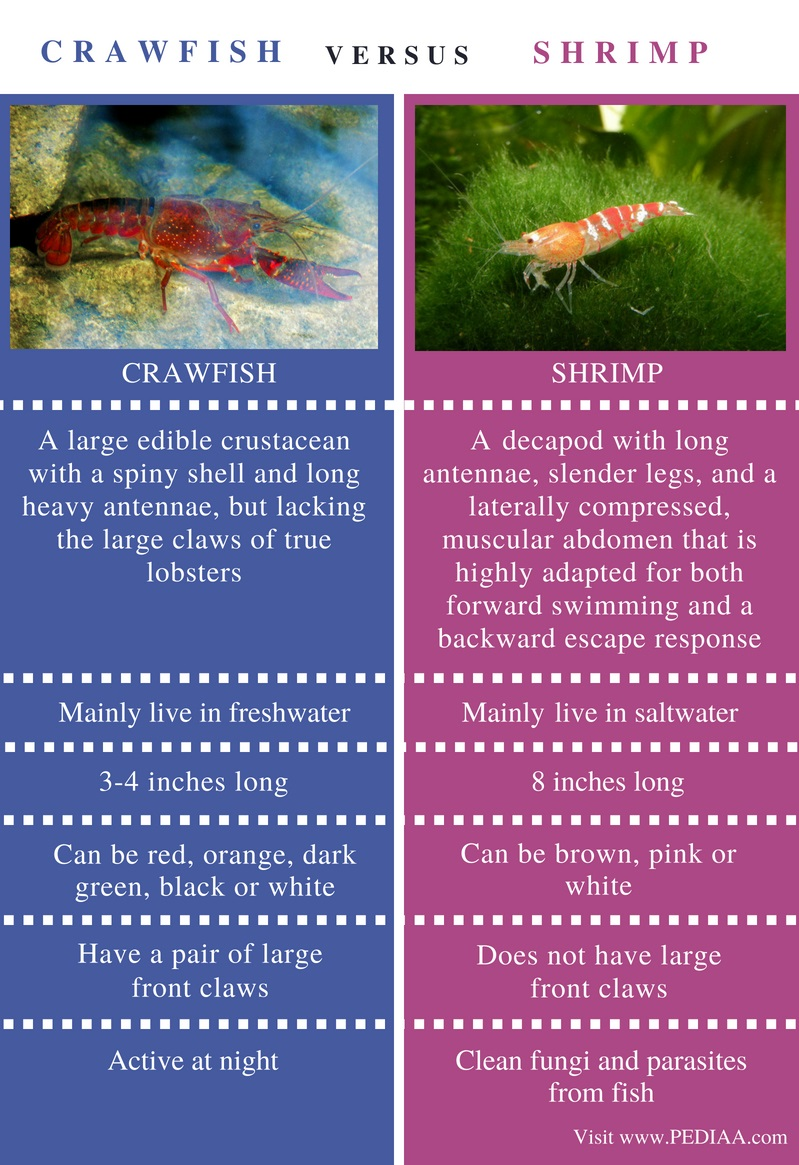 Difference Between Crawfish and Shrimp - Comparison Summary