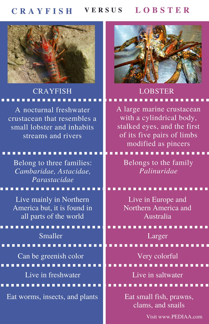 Difference Between Crayfish and Lobster - Comparison Summary