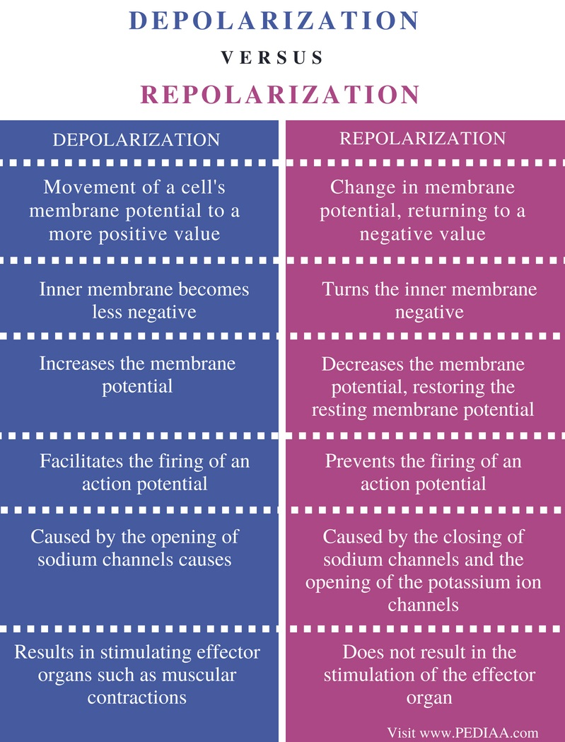 Difference Between Depolarization and Repolarization - Comparison Summary
