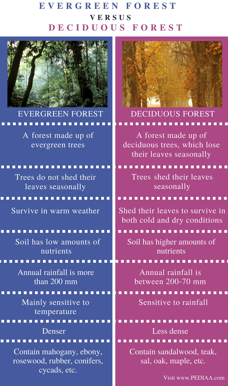 Difference Between Evergreen and Deciduous Forest - Comparison Summary